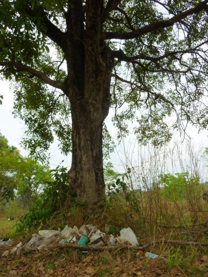 Behold, the trashy tree.