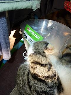 paw+cone