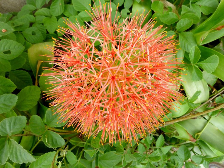 beautiful flower in chiang mai