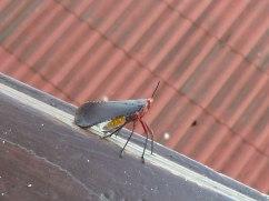 mystery-bug