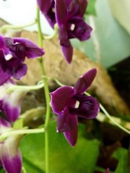purple-orchids
