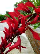 red-flowers