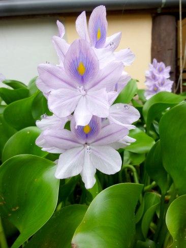 water-plants