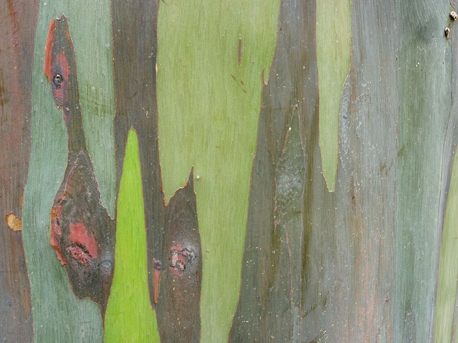 Closeup of tree (photo by EW) at rai mae fah luang art cultural park