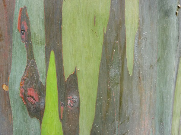 Closeup of colorful trunk of tree