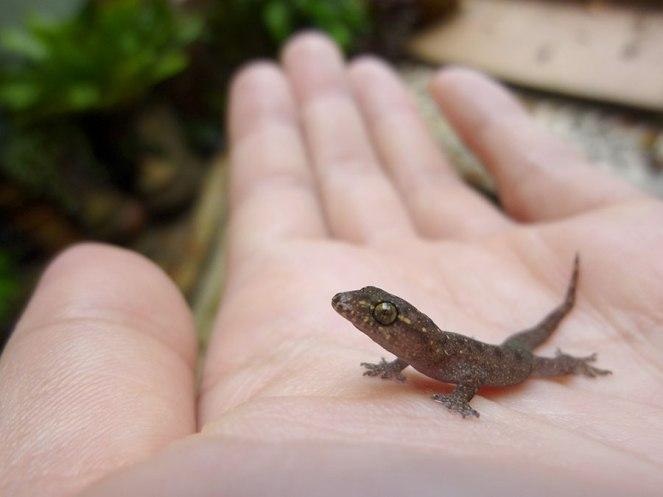 gecko-rescue