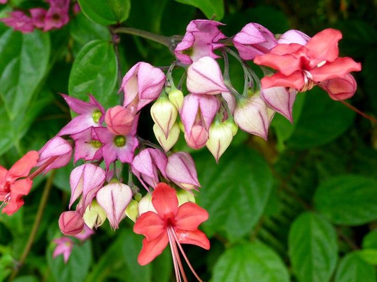 pretty-flowers