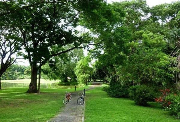 bicycles at rai mae fah luang