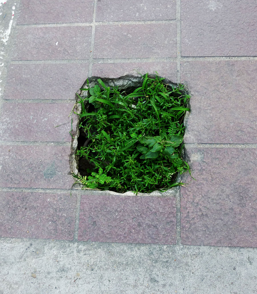 Green plant patch growing out of concrete