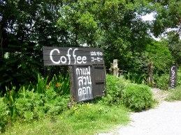 suan-dok-coffee chiang rai