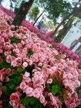 Chiang Rai flowers