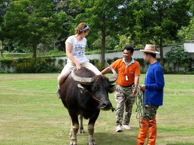 Of course, you could always try riding a buffalo like Holly...[Chiang Mai, 2009]