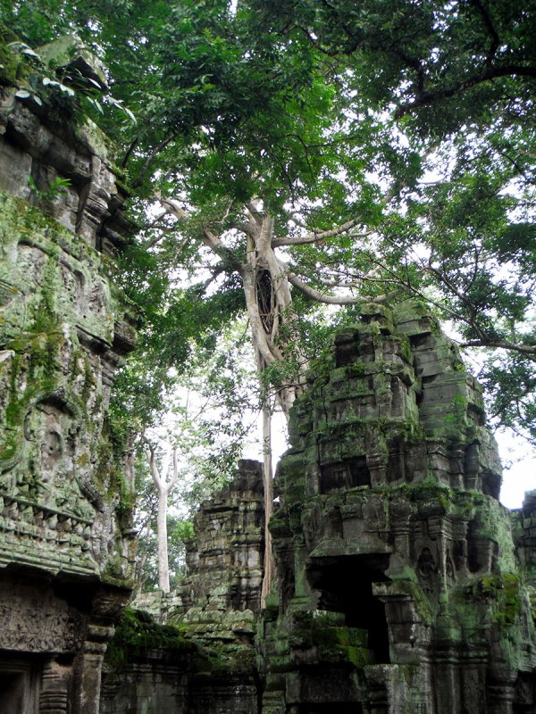 Ta Prohm was built by Jayavarman VII and was just as magical as billed. (Buddhist) [mid 12th, early 13th cent.]