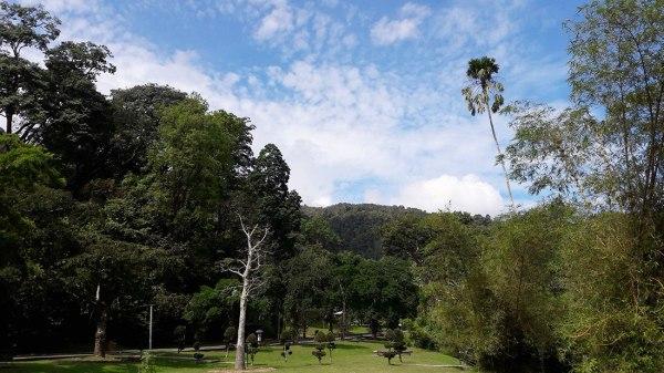 botanical-gardens-penang