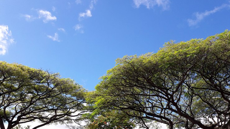 beautiful trees and blue sky