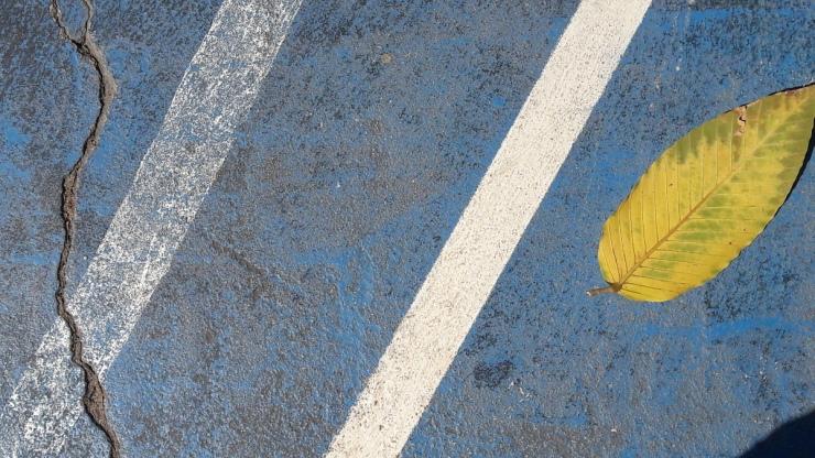 crack and leaf basketball court