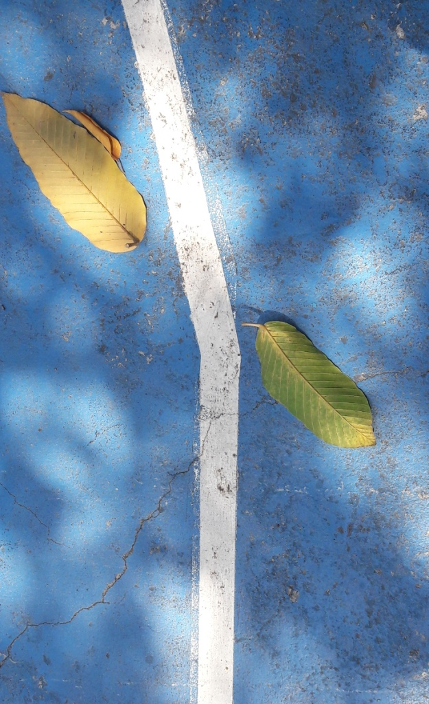 two leaves on a basketball court