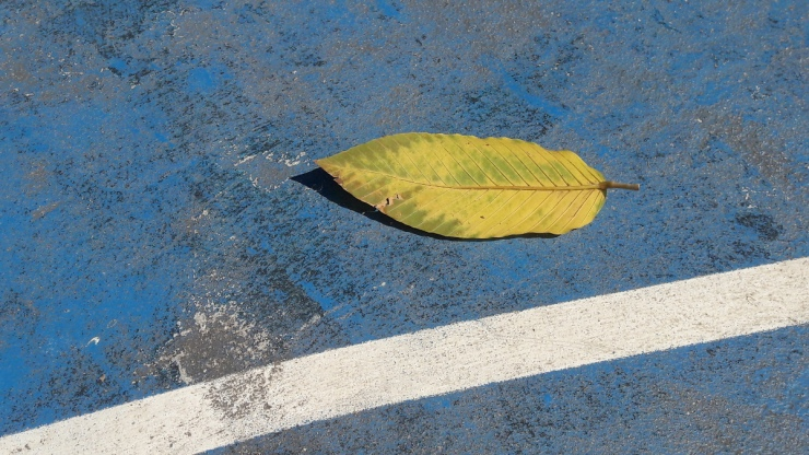 yellow leaf on basketball court